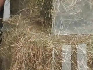 dicklovers - fuckfest 3 farmer in