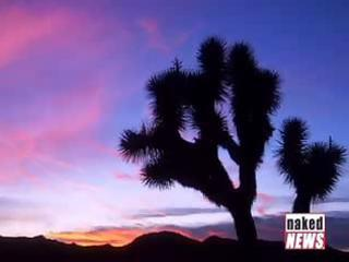 bare in joshua tree national park!